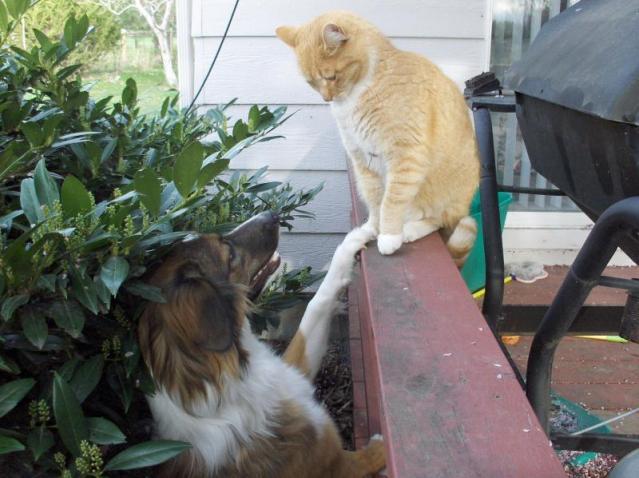 Frugaldog makes a friend