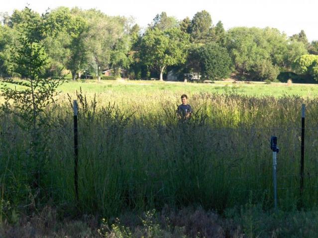 Pasture 2008